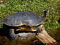 Brevard Zoo, Viera FL - Flickr - Rusty Clark (164).jpg