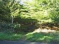 Bridleway, Parson's Spring Wood, Blackmore - geograph.org.uk - 67893.jpg