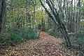 Bridleway, Tinley Lodge Toll - geograph.org.uk - 1576110.jpg