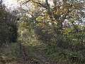 Bridleway between Coastley and Low Gate - geograph.org.uk - 1594963.jpg