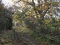 Bridleway between Coastley and Low Gate - geograph.org.uk - 1594963.jpg