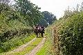 Bridleway east of West Stoke Farm - geograph.org.uk - 943746.jpg