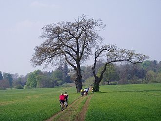 Bridle path - Cyclists on a bridleway in England