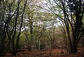 Broadwater Forest - geograph.org.uk - 1589497.jpg