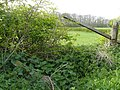 Broken Hedge - geograph.org.uk - 1298692.jpg