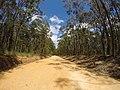 Brooman NSW 2538, Australia - panoramio (118).jpg