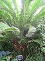 Buffalo and Erie County Botanical Gardens - 1-10 - IMG 3536.JPG