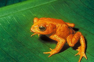 Near-threatened species IUCN conservation category