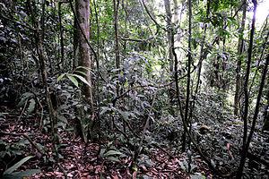 Bukit Lawang - Jungle near Bukit Lawang