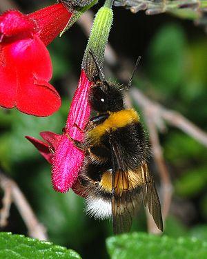 image of Bumblebee 2007-2