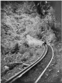 Bush tramway showing wooden rails, at Akatarawa, Price's Bush, circa 1903 ATLIB 336634.png