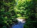 Butchart Gardens, Victoria, British Columbia, Canada (29043874622).jpg