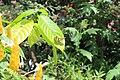 Butterfly Rainforest FMNH 42.jpg