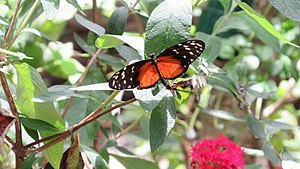Broward County, Florida - Butterfly World, Coconut Creek