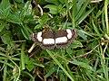 Butterfly kenya.jpg