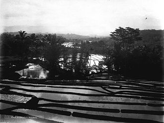 West Java - Rice fields terrace in Priangan highland, West Java, Dutch East Indies. In/before 1926.