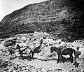 COLLECTIE TROPENMUSEUM Tocht te paard naar de krater van de Papandajan TMnr 10004057.jpg