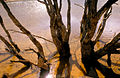 CSIRO ScienceImage 4112 Dead trees in the Brukunga Pyrites Mine tailings dam east of Adelaide in the Mount Lofty Ranges South Australia 1992.jpg