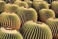 Cactus park Lanzarote (3226341902).jpg