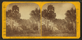 Camping out in Florida. The palmetto hut, by Styles, A. F., 1832-1910.png