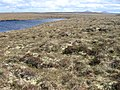 Caol-loch - geograph.org.uk - 1340468.jpg