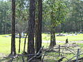 Carbrook Lutheran Cemetery - view from road, 2005.JPG