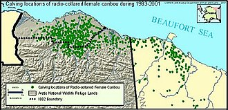 Arctic Refuge drilling controversy - A map of Caribou calving grounds, 1983–2001.