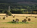 Carse Farm Stone Circle - geograph.org.uk - 504250.jpg