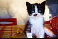 Cat (7914620030).jpg
