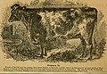 Cattle (1851) (20398554348).jpg