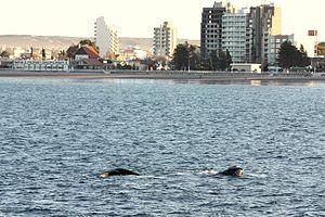 Puerto Madryn - Image: Cerca de Puerto Madryn