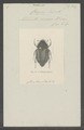 Chasme - Print - Iconographia Zoologica - Special Collections University of Amsterdam - UBAINV0274 020 01 0002.tif
