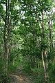 Chet Khot-Pong Kon Sao Nature Study Centre - panoramio - Andreas Hörstemeier (2).jpg