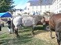 Chevaux bretons au Faouët.jpg