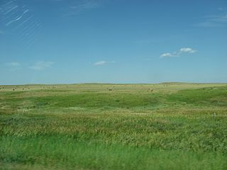 Cheyenne River Indian Reservation Reservation in South Dakota, United States