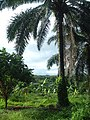 Cho Po Ro, Kra Buri District, Ranong 85110, Thailand - panoramio (20).jpg