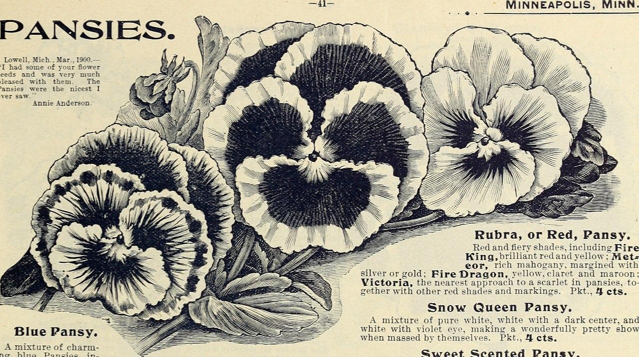 File:Choice flower seeds (1901) (20422996189).jpg