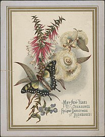 Christmas card with Australian wildflowers and a butterfly, ca. 1881.jpg