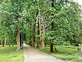 City park - panoramio - pepanos.jpg