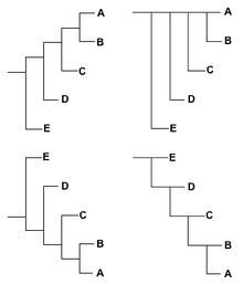 cladogram template