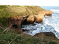 Cliffs from the Berwickshire Coastal Path