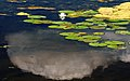 Cloud and Water Lily (843564879).jpg