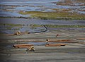 Coastal Wetlands Restoration After Katrina (20661627496).jpg