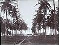 Collectie Nationaal Museum van Wereldculturen TM-60062319 Vuurtoren, Kingston Jamaica fotograaf niet bekend.jpg