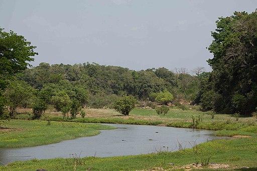 Comoe river with wetlands