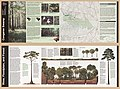 Congaree Swamp National Monument, South Carolina LOC 2005630413.jpg