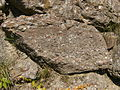 Conglomerate.3061.JPG