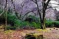 Connemara - Kylemore Abbey - Landscape - geograph.org.uk - 1623334.jpg