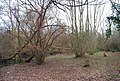 Coppiced trees by the River Medway - geograph.org.uk - 1159044.jpg