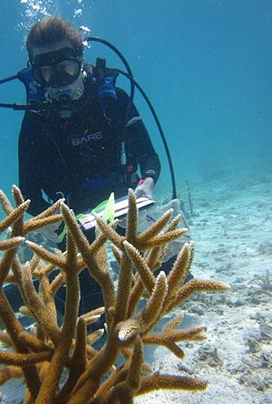 Oracabessa Bay Fish Sanctuary - Staghorn Coral Cultivation